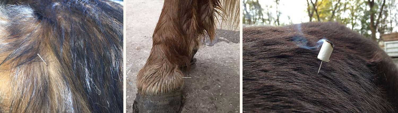 Akupunktur Hund Pferd