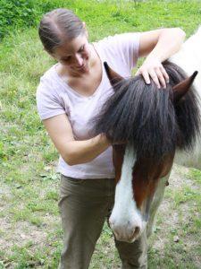 Cranio Sacral beim Pferd