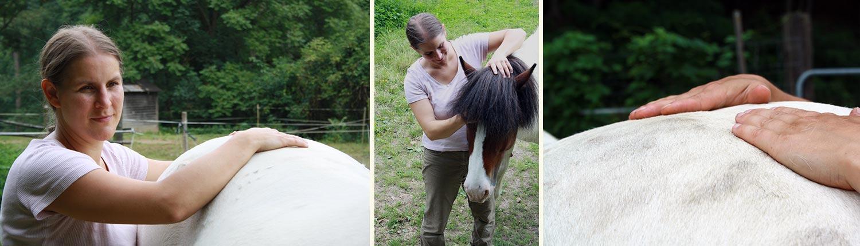 Cranio Sacral Therapie Pferd