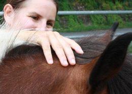 Osteopathie beim Pferd