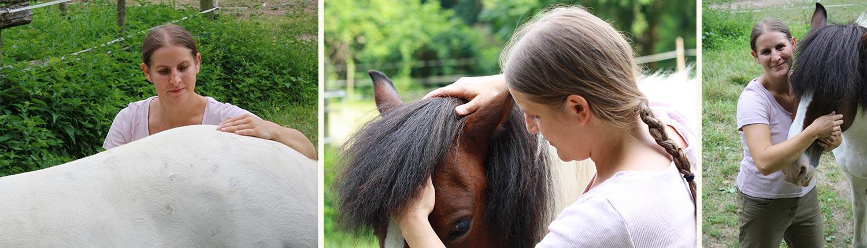 Tieraerztin Pferde Wien